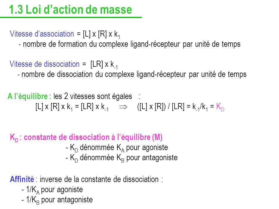 1.3 Loi d'action de masse Vitesse d'association = [L] x [R] x k1